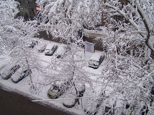 View from my window this morning
