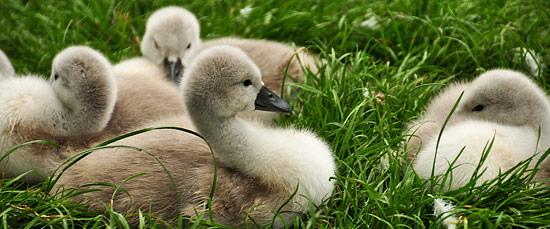 3744609982_58182d2ec9_o The Wildlife Park at Cricket St Thomas -  Chard Somerset, UK UK West Country  Wildlife UK Somerset Gardens