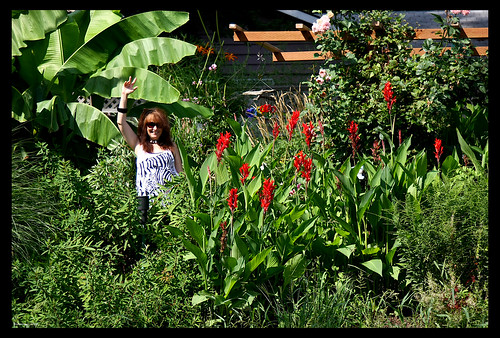 Happy August from my garden!!! Bananas and Cannas gone wild by you.