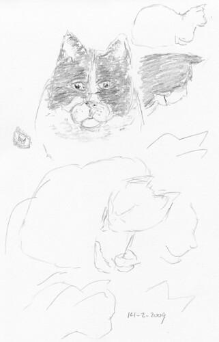 Cat sketches 001