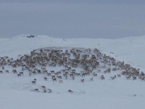 Reindeer Hill