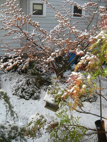 Garden snow scene