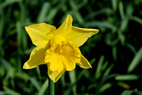 cc image courtesy flickr.com/photos/ennor