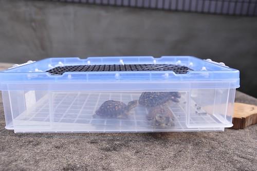 烏龜·自製·自製烏龜箱 – 青蛙堂部落格