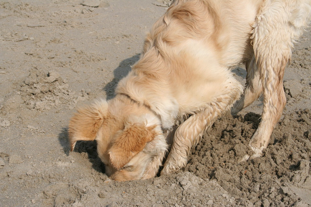 digging for treasure ..