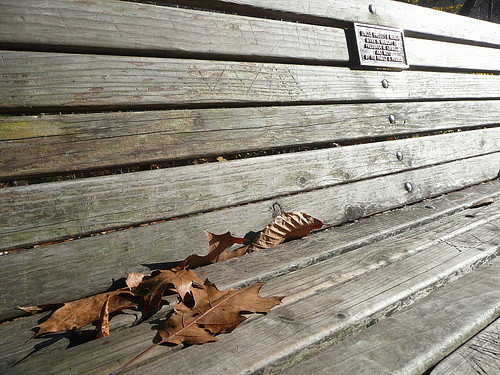 Uncle Freddy's bench with leaves