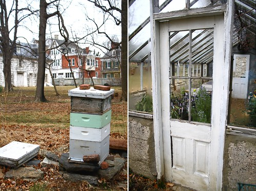 Wyck greenhouse and bees