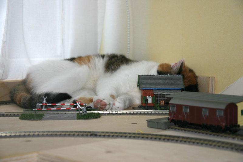 Mischou-trein-IMG_3653