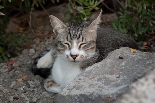 El gato del puerto (II)