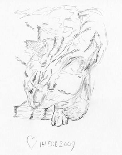 Cat sketches 004