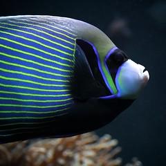T2i - Fish