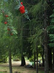 Parque de Campismo da Fraguinha