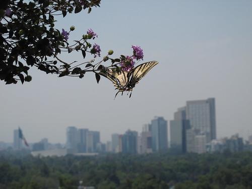 Butterfly in the Bosque de Chapultepec