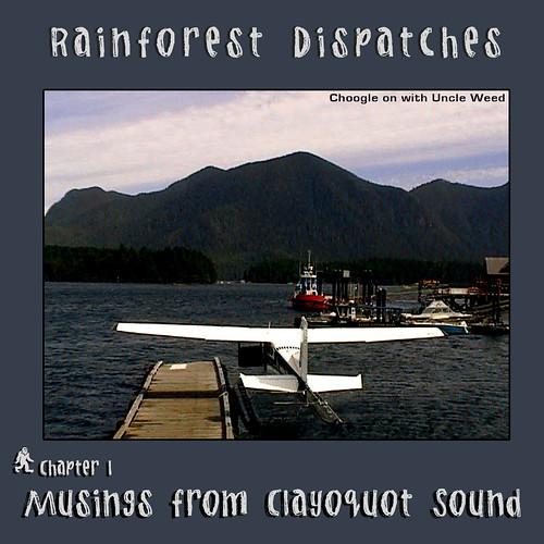 rainforest 1 musings