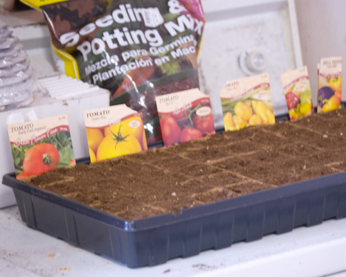 Feb 25 seedlings started