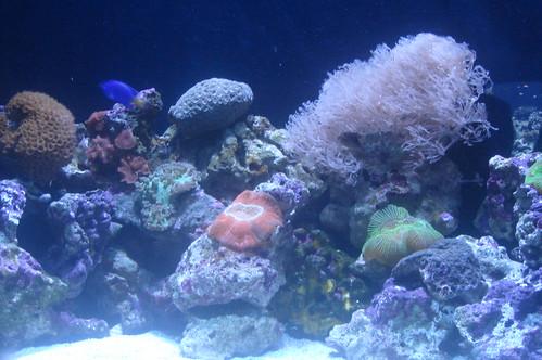 珊瑚與海葵