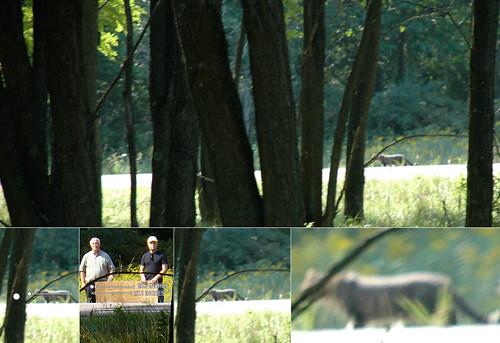 Leelanau County Cougar photos