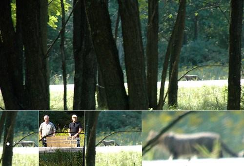 "Michigan Cougar Confirmation? Leelanau photos seem to say ""Yes"""