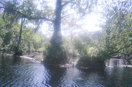 Canoeing Merchant's Millpond - Khalif, Terrance and Dada's Boat - Goose