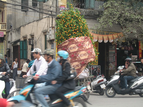This 15ft (?) Kumquat tree was being driven around by moped. For Tet, these trees are lucky to have in your home.