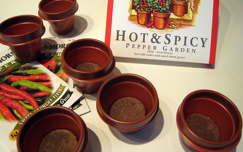 Mini plant pots for seeds.