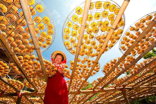 Taiwan Hsinpu Persimmon Garden