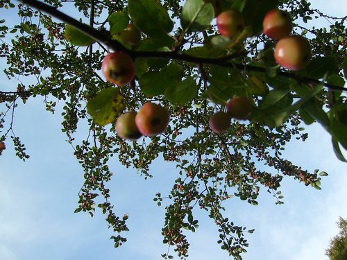 fruit and sky