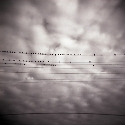 birds008.jpg