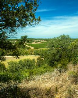 Driftwood Vineyards