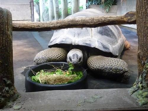 WI, Madison Zoo 10 - Tortoise (large)