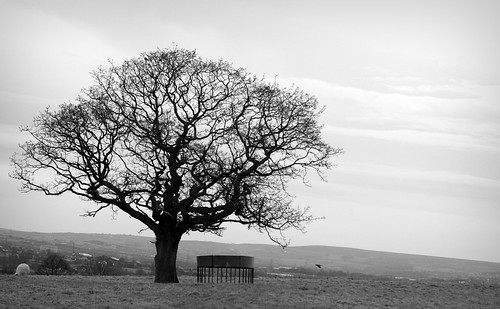 Tree- in Black & White by Davescunningplan
