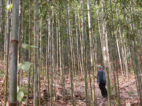 Glenn Brackett among the Bamboo