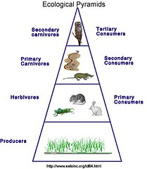 Autotrophs are provide energy for all other organisms that follow it.