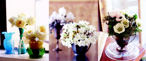 Kate Holt: Flower Wild