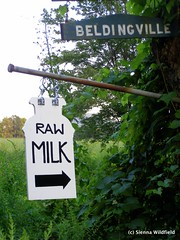Raw Milk in Ashfield, MA