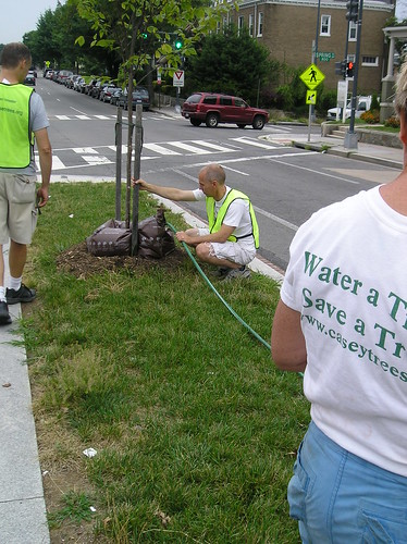 NH Tree Watering