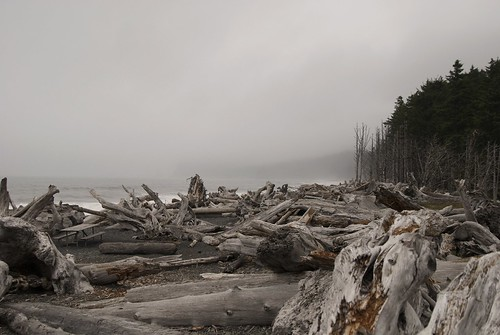 You have to hike and climb over the drift wood to get to the beach I had never seen anything quite like this before.