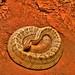 Snake by LMD64