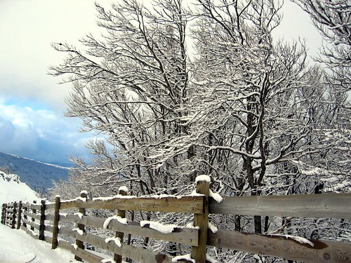 Snowy fence and trees at the Col de Rousset.