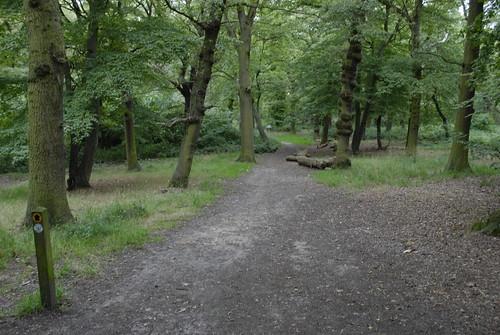 Horsenden Hill Wood