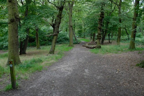 Horsenden Hill Wood