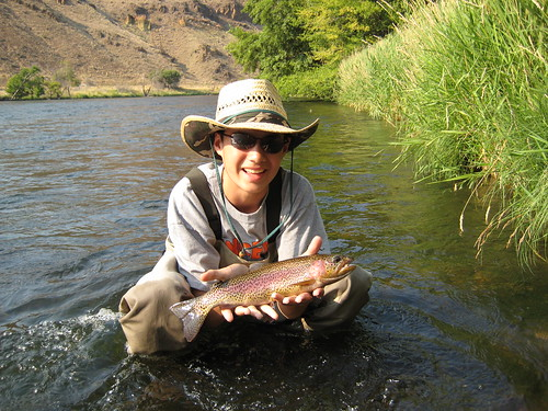 A Deschutes River Wild Rainbow Trout
