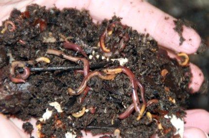 workingworms