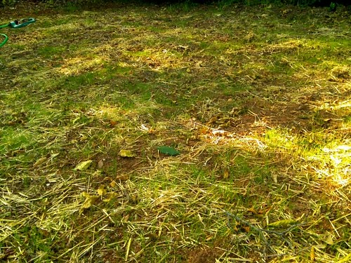 The New Grass in my Yard