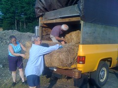 Hay bales for Mosaic
