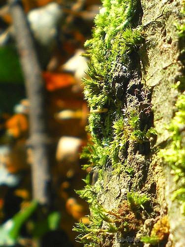 Herbst :: Moos