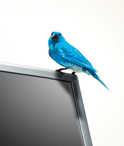 The Twitter bird escaped