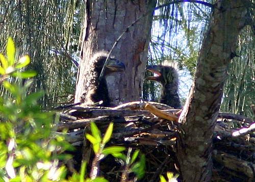 Eagle Nest Mates 20090215