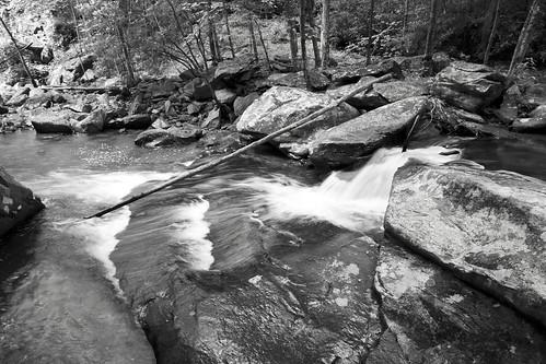 Fallen Tree 3,Julian Price Park,NC