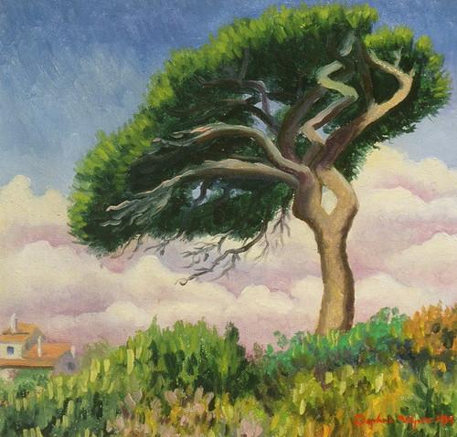 Windswept Umbrella Tree in Portugal